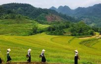Pu-luong-terraced-rice-fields