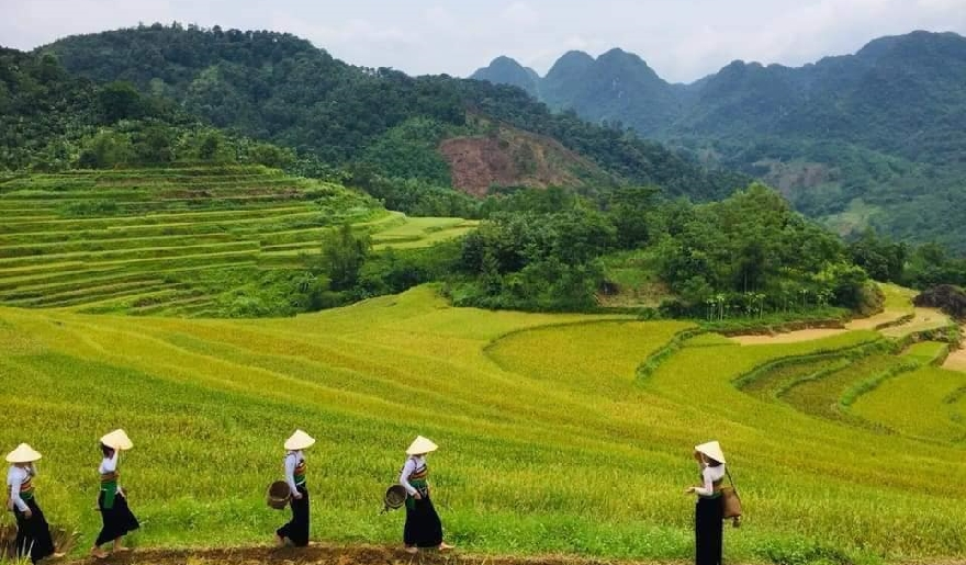 Pu-luong-terrace-rice-fields
